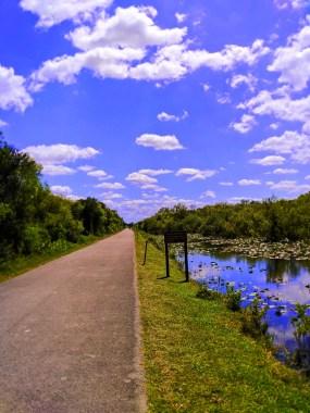 Hiking Road at Everglades NPS Shark Valley 2
