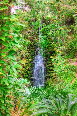 Lush Waterfall Garden at Rainbow Springs State Park 2