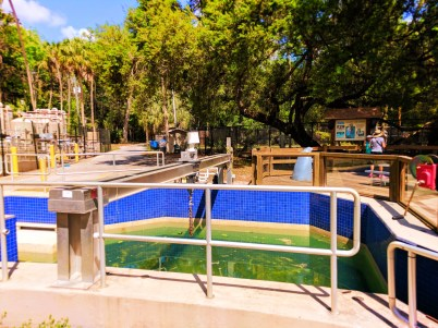 Manatee Exhibit at Homosassa Springs State Park Florida 2