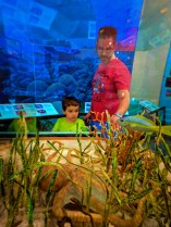 Taylor Family with undersea displays at Biscayne National Park 1