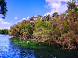 Crystal clear water at Blue Spring State Park Daytona Beach 12