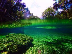 Crystal clear water at Blue Spring State Park Daytona Beach 2