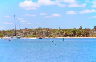 Dolphins in Matanzas River kayaking Ripple Effect Ecotours St Augustine 1