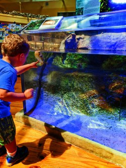 Taylor Family at Puffer Fish Tank at Ponce Inlet Marine Science Center 2