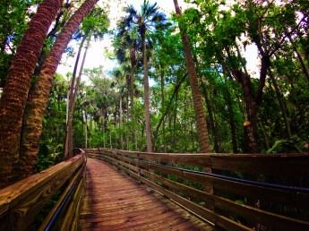 Boardwalk hiking at Blue Spring State Park Daytona Beach 1