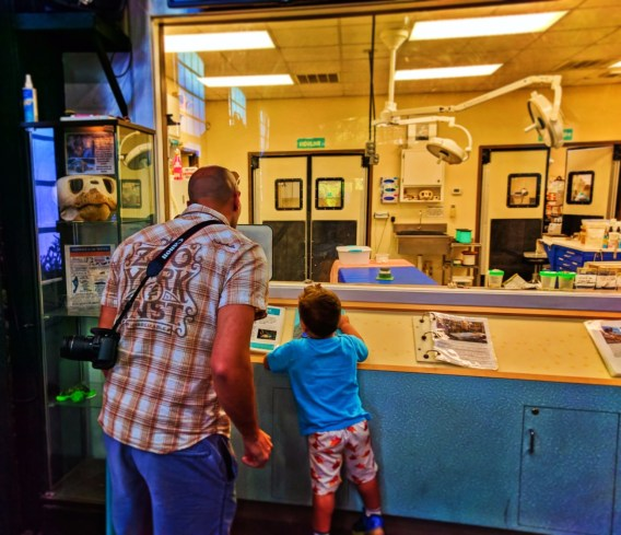 Vet clinic at Georgia Sea Turtle Center Jekyll Island Golden Isles Georgia 2