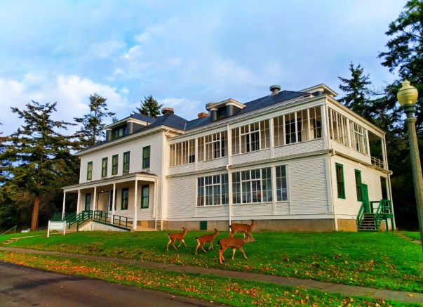 Deer at Barrack apartment at Fort Worden Conference Center Port Townsend 1