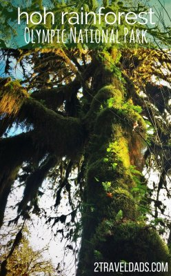 Exploring the Hoh Rain Forest in Olympic National Park with kids is so cool. Ancient trees dripping with moss, fungi and herds of Roosevelt elk. 2traveldads.com