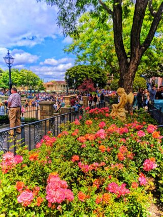 Roses on the Rivers of America New Orleans Square Disneyland 1