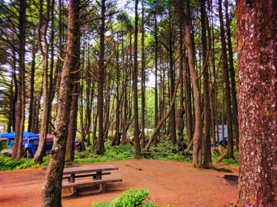 Campground at Kalaloch Olympic National Park 1