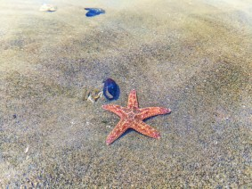 Sea star on sandbar at Ruby Beach Olympic National Park 5