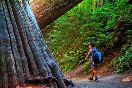 Taylor Family hiking Grove of the Patriarchs Mt Rainier National Park 14