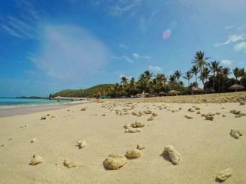 Coral on Beach on Isla Palomino El Conquistador Puerto Rico 1
