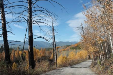 Road to Bowman Lake Polebridge Glacier National Park