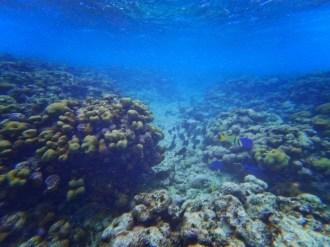 Tropical fish snorkeling Isla Palominito Puerto Rico 2