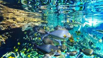 Underwater Snorkeling at Rainbow Reef Disney Aulani 3