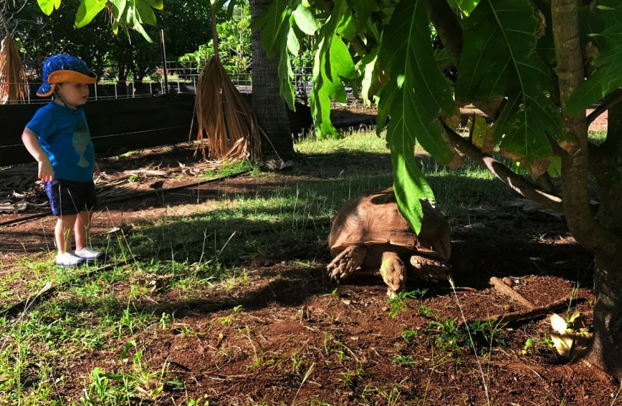 2Dads LaBadie family with Tortoise at Poipu Koloa on Kauai ALaBadie 2TD writer 1