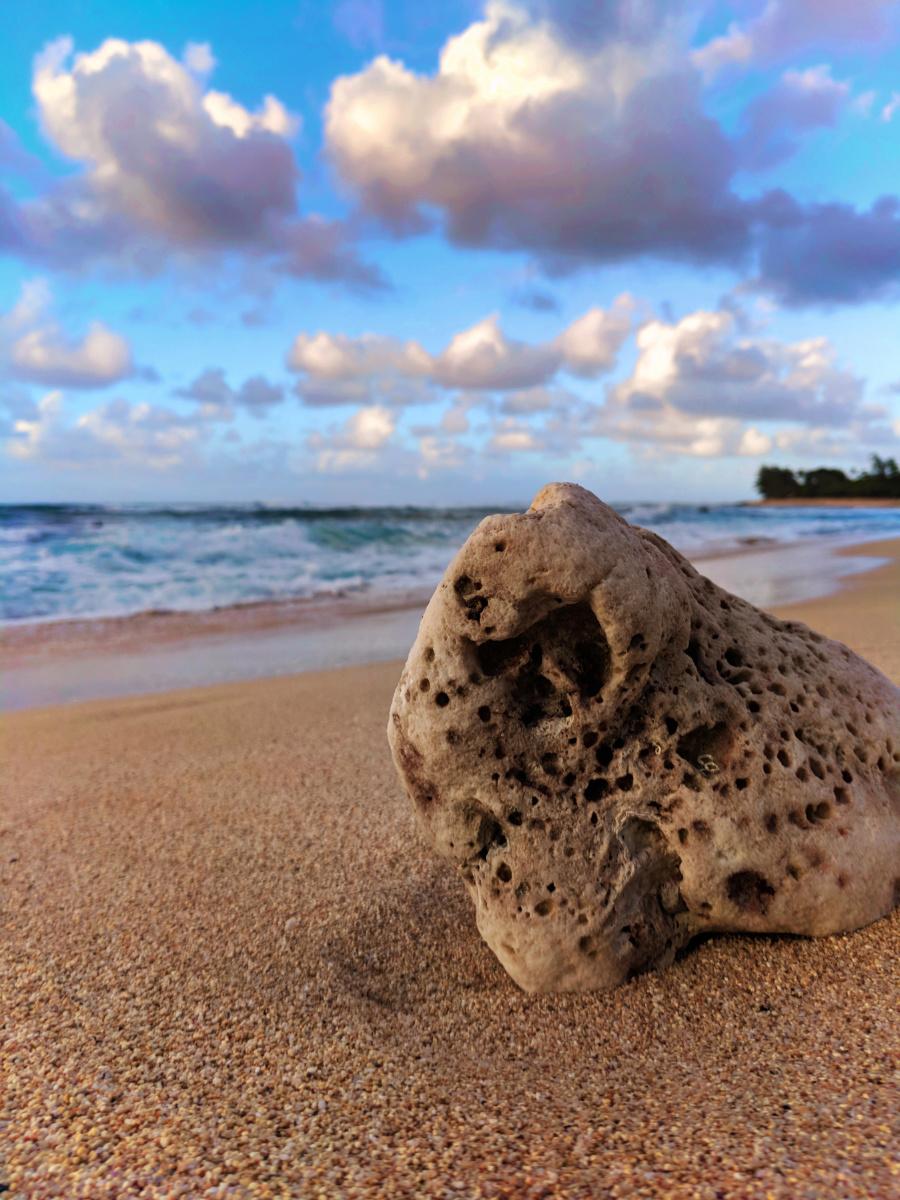 Coral chunk at Sunset Beach Haleiwa North Shore Oahu 1