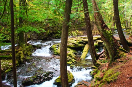Stream at Panther Creek Falls Columbia Gorge 5