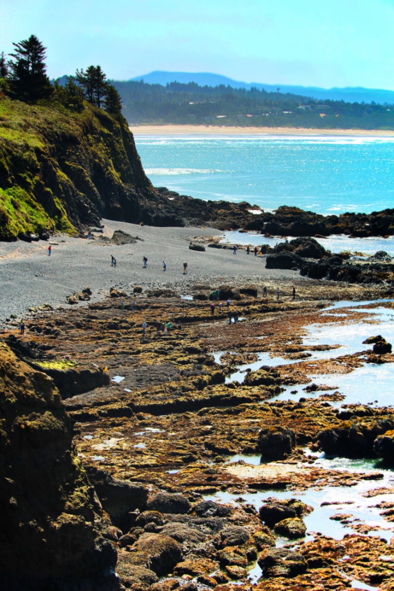 Tide Pools at Yaquina Head Lighthouse cove Newport Oregon Coast 1