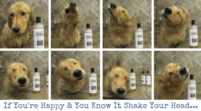 if-youre-happy-you-know-it-shake-your-head
