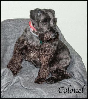 Colonelshare1