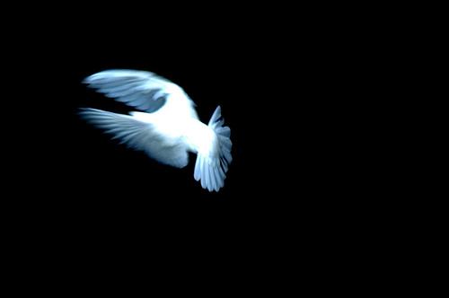dove_bnw