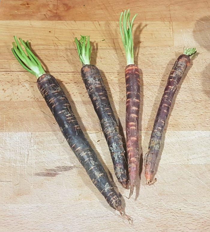 Zanahorias Moradas