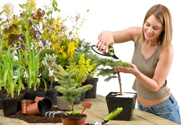 После пересадки цветок лучше не подвергать стрессам