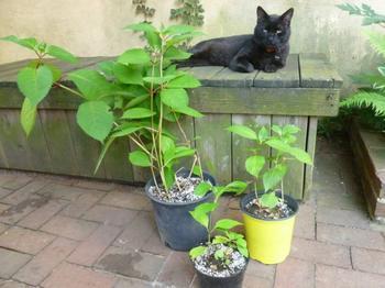 10 гуманных способов как отвадить котов от грядок