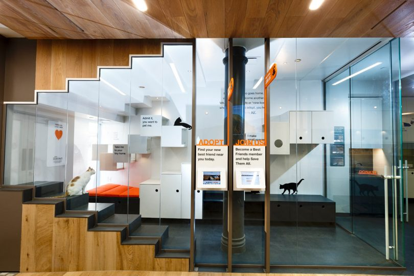 Best Friends Animal Society Gets a State-of-the-Art Space in NYC