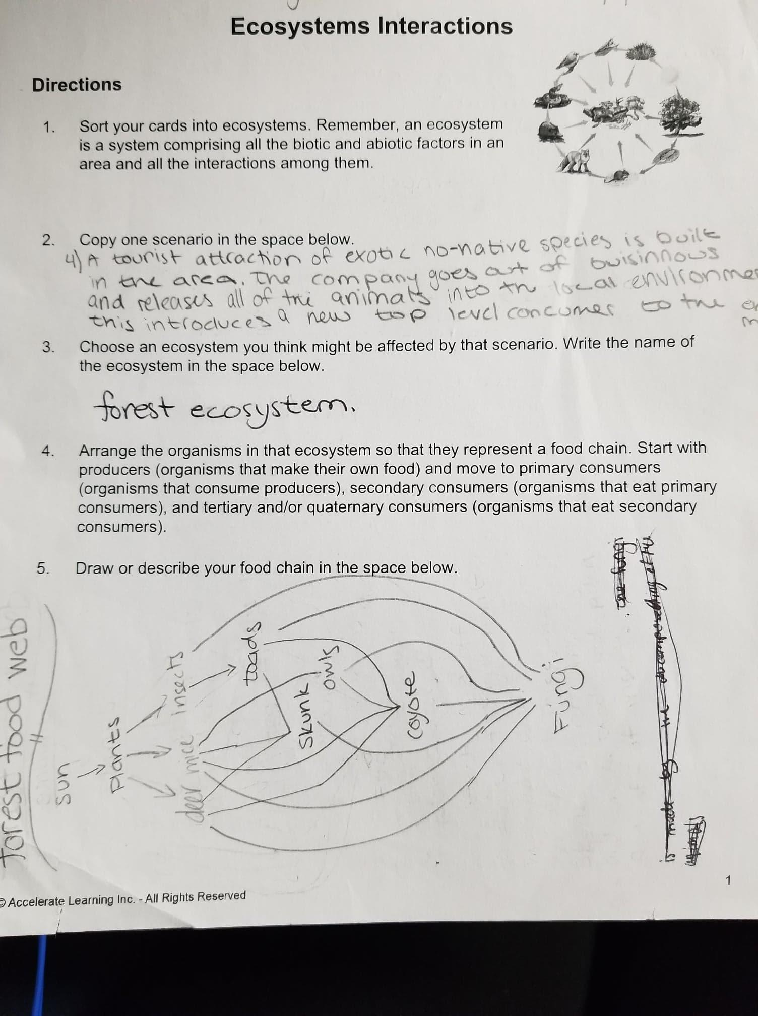 Accelerate Learning Worksheet Answers 7th Grade Science