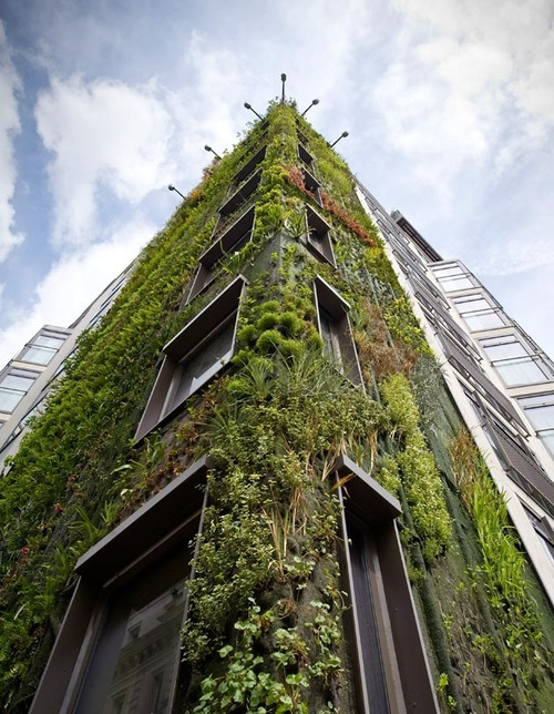 Patrick Blanc's most high-profile project to date: the eight-story antigravity forest facade composed of 12,000 plants for the Athenaeum Hotel in London.