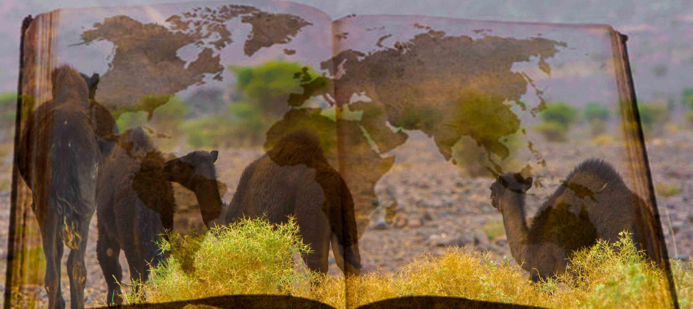 Manual de Viaje, mochilero, aventura, turismo responsable.