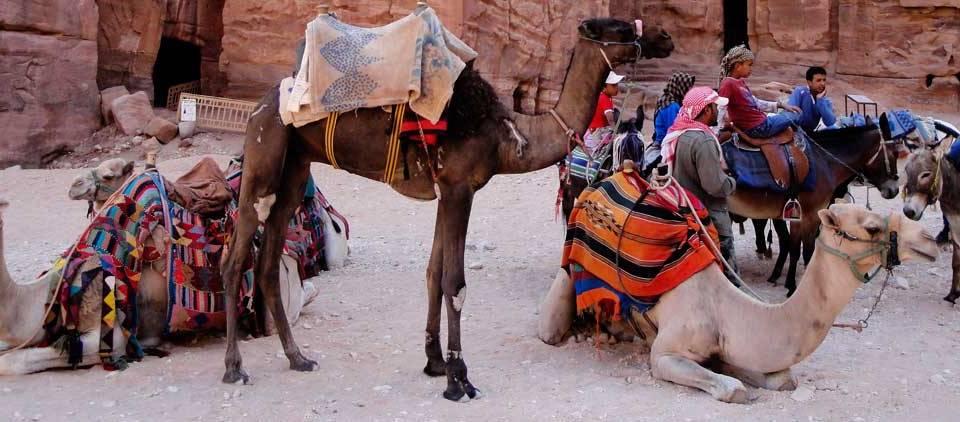 Camellos, Jordania, Asia: Viajes de Aventura, Viajes Alternativos, Turismo Responsable, Mochilero, Viajar en Grupo, Viajar Sola. 3000KM
