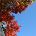 高尾山の11月の気温は?紅葉シーズンの服装と持ち物はこれ