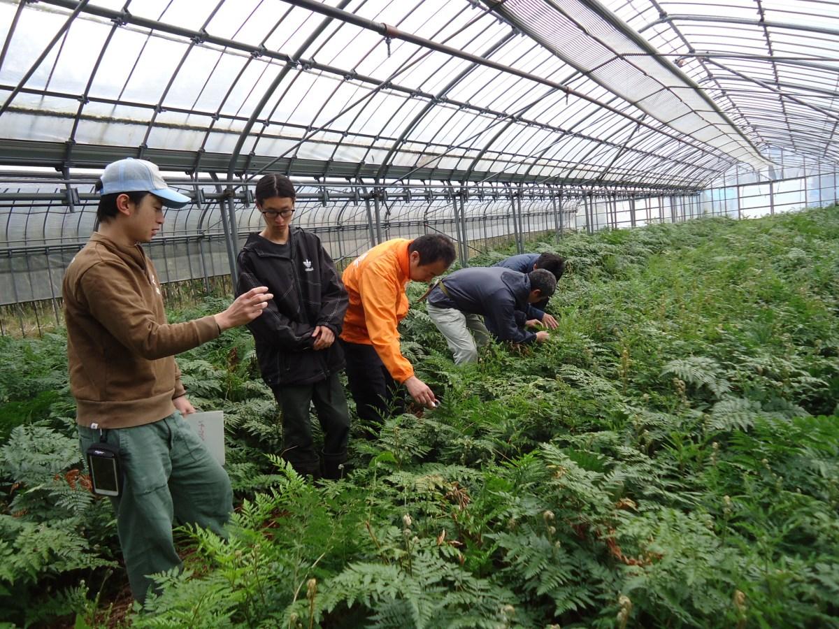 【3泊4日の農業インターンシップ】東京都八丈島の「農ある島暮らし体験」が、2019/2/7〜10に開催されます