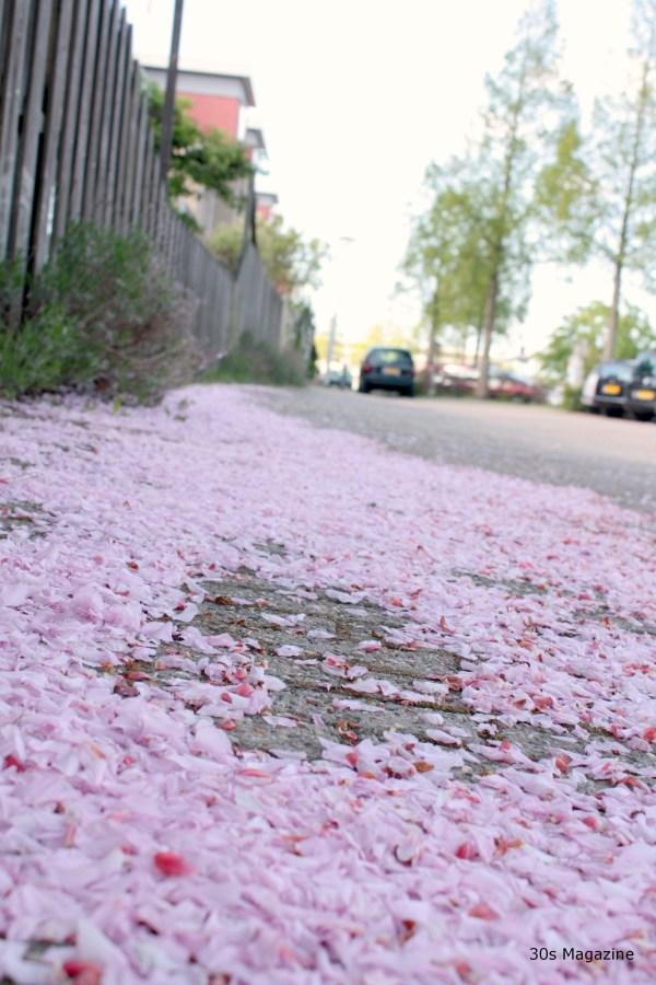 blossom petals
