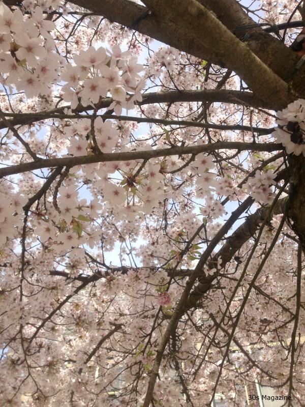 under the blossom tree