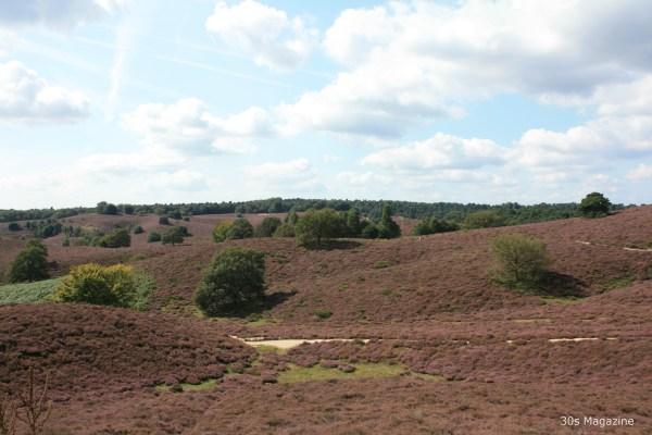 heather field