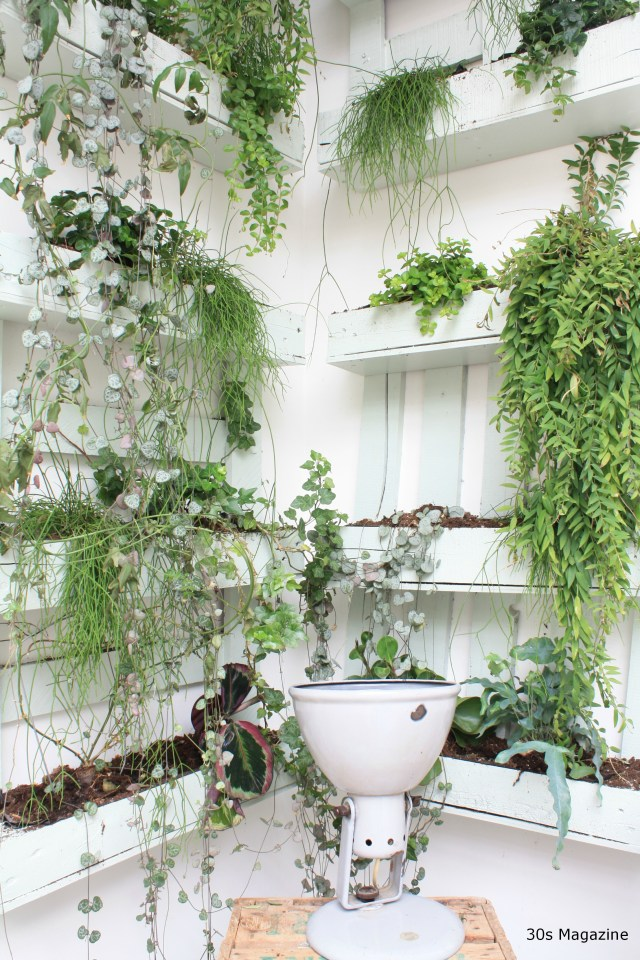 Trend: Elevated Plants