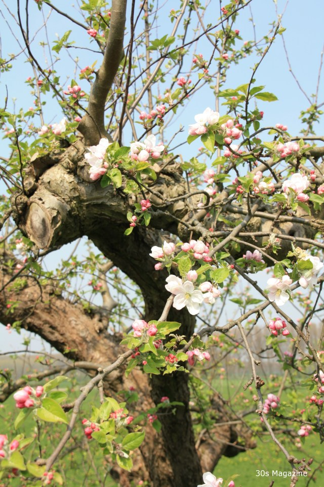 Weekend Tip: The Dutch blossom trails