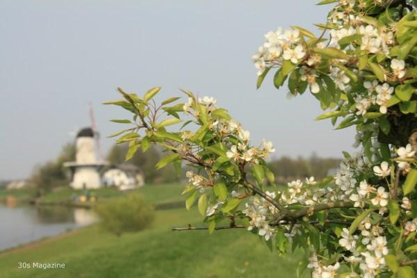 blossomtour4