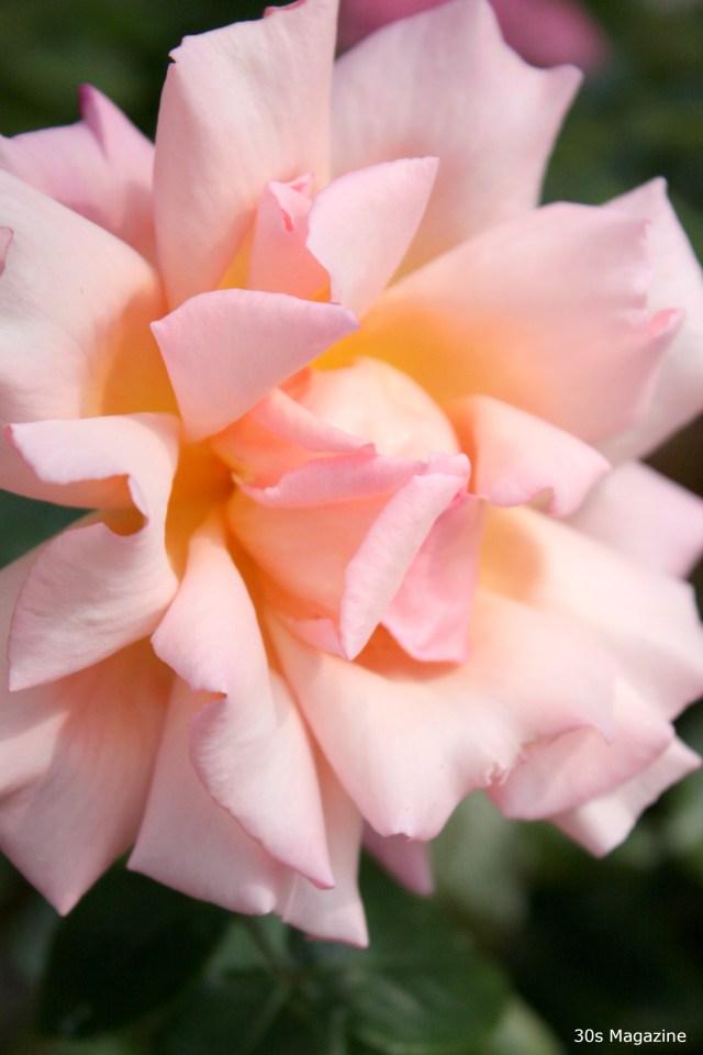 Flowers for Inga