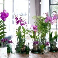 8 Tips how to Style Orchids in your Home Decor