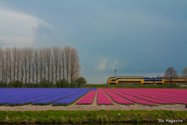 The Dutch flowerfields; When and where to see them