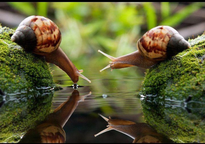 amischiefofmice:    a-fart-has-no-nose:    HOLY SHIT.    march of the noot noots    The snails are gorgeous.  They are a work of art—a work of nature.  Nature has given them the perfect colors  for camouflage.  I could sit a whole day and watch them.  It's important to take time to enjoy nature  and its beautiful creations.