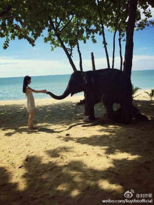 Liu Yifei with baby elephant