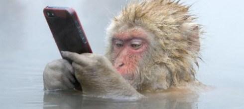 日本|猴腮雷之好有戲的猴子們~:P
