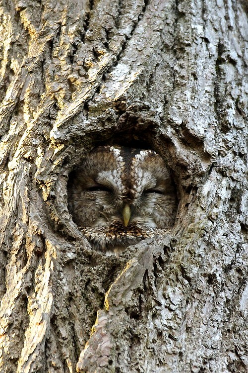 travelbinge:</p> <p>Bark owl by Henrik Hugnell</p> <p>Do you ever feel like this owl?<br /> Blended into your environment so well<br /> that people don't notice you?<br /> You might be talking<br /> but no one is listening.<br /> The owl wants to be invisible.<br /> And sometimes I'm invisible too.